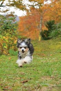 秋を走る♪・Ⅰ(キミの笑顔に言葉はいらない。) - FUNKY'S BLUE SKY