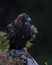 思い出画像 - 野鳥フレンド  撮り日記
