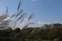 秋深まって。。。昭和記念公園 - Let's Enjoy Everyday!