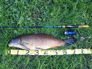 今週も鯉釣り -