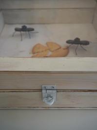 箱とフレームのこと - 日々の営み 酒井賢司のイラストレーション倉庫