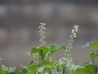 庭の草花(26回目) - 小さなお庭のある家(パート2)