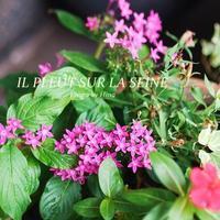 イルプルーのお花 - Cucina ACCA