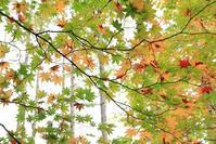 秋色シンフォニー - * 写ing!Ⅱ *