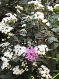 10月半ばのお庭の花達 - piecing・針仕事と庭仕事の日々