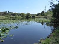 見沼自然公園&彼岸花ロードでJR北海道&東日本パスの旅7日目は終わり♪ - ルソイの半バックパッカー旅