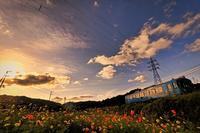 コスモス畑の夕暮れ - 今日も丹後鉄道