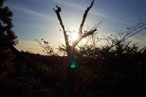 木のある風景 2 -