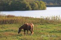 放牧馬を訪ねて - ロマンティックフォト北海道☆カヌードデバーチョ
