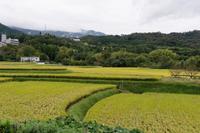 雨上がりの田園 - katsuのヘタッピ風景
