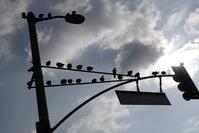 Free birds - COOL STUFF