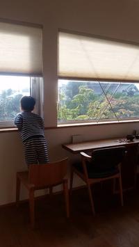 吉見の家今年の紅葉は - 成長する家 子育て物語