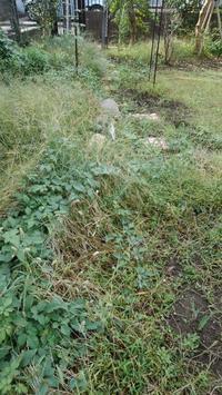 ロックガーデンの草取り - うちの庭の備忘録 green's garden