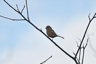 鳥は色々いるが、、、今週のウトナイ湖 - やぁやぁ。