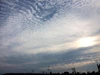 今朝の空と青虫パトロール - マイニチ★コバッケン