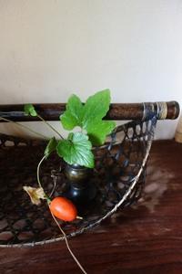 庭に烏瓜が - g's style day by day ー京都嵐山から、季節を楽しむ日々をお届けしますー