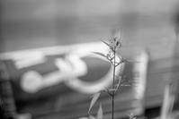 すくすくと成長するひっつき虫 - Film&Gasoline