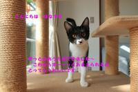 こんやも幸せ便りです - 八幡地域猫を考える会