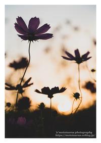 秋の気持ち - ♉ mototaurus photography