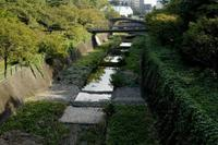 昭和記念公園コスモスの秋(6) - M8とR-D1写真日記