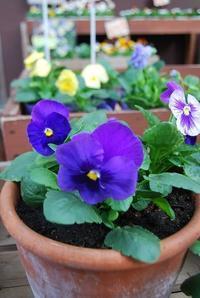 寄せ植えなど植え替えをしませんか - 花と暮らす店 木花 Mocca