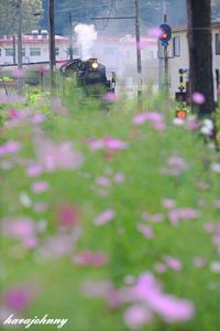 彼岸秋桜 - 蒸気をおいかけて・・・少年のように