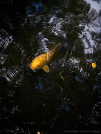 お池にて - M2_pictlog