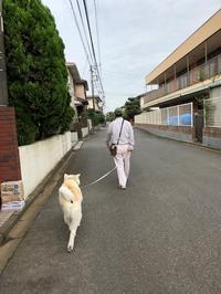 冴えない - 秋田犬「大和と飛鳥丸」の日々Ⅱ