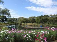 『木舟遊覧と秋桜の風景~』 - 自然風の自然風だより