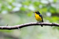 秋の渡りの水場 - Bird Healing