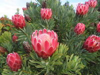 いろいろ花の話題 - いい旅・夢Kiwi スカイキウィの夢日記