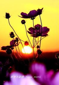 明日へ・・・ - 花々の記憶    happy_momo