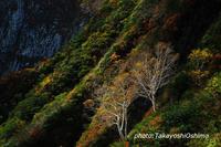 紅葉の山を行く - Digital Photo Diary