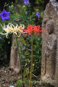 奈良元興寺秋の花々 - 暮らしを紡ぐ