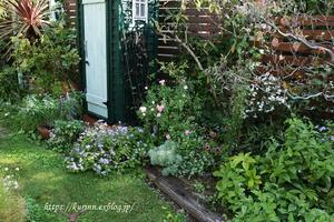 秋から楽しむ花苗GET♪ 今日のザ・フェアリー - miyorinの秘密のお庭