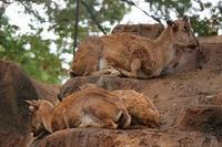 夢見ヶ崎動物公園① - つれづれ日記