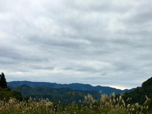 【topics】 ブナミズナラ帯のオオクワを求めて材採集  2018年  vol2    立枯れは…   予告編 - Kuwashinブログ