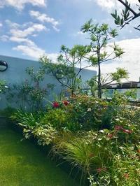 秋のベランダガーデン - 緑のしずく (ベランダガーデン便り)