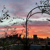 夕焼けのベランダガーデン - 緑のしずく (ベランダガーデン便り)