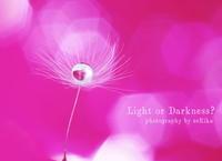 Puffball - Light or Darkness?