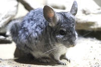 かわいい小さな動物たち - 動物園放浪記