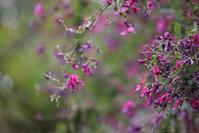 庭園で秋色さがして・・・! - 一場の写真 / 足立区リフォーム館・頑張る会社ブログ