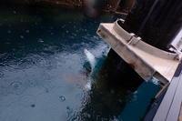 18.10.17須江からお越しどすえ。 - 沖縄本島 島んちゅガイドの『ダイビング日誌』