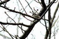 公園で、エナガたちに出会った。 - ぶらり散歩 ~四季折々フォト日記~