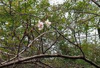 四季桜も♪ - 金沢犀川温泉 川端の湯宿「滝亭」BLOG