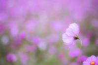 Vue arrière - Une fleur