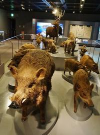 兵庫県立人と自然の博物館①森に生きる - たんぶーらんの戯言