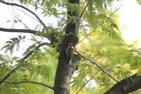 木から木へ - Bamboobooのひとりごと