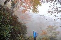 稲村ヶ岳は霧の中・・・(2) - ratoの山歩き