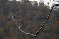 森の触手 - フォトな日々
